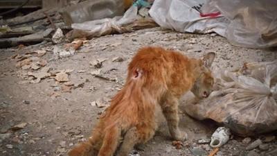 Los gatos destrozados por la guerra de Siria