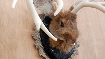 Meet the Taxidermist Who Eats Her Subjects