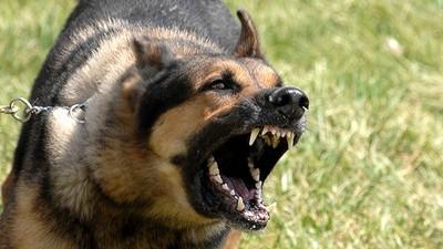 A los perros les encanta comer rostros humanos