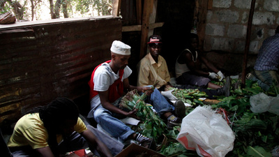 Why the Khat Ban Will Be Almost As Pointless As the Drug Itself