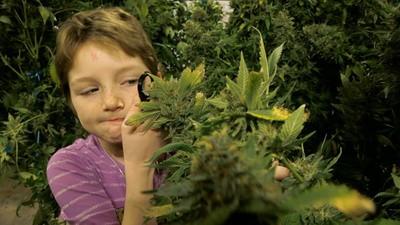 Cannabis und das achtjährige Mädchen