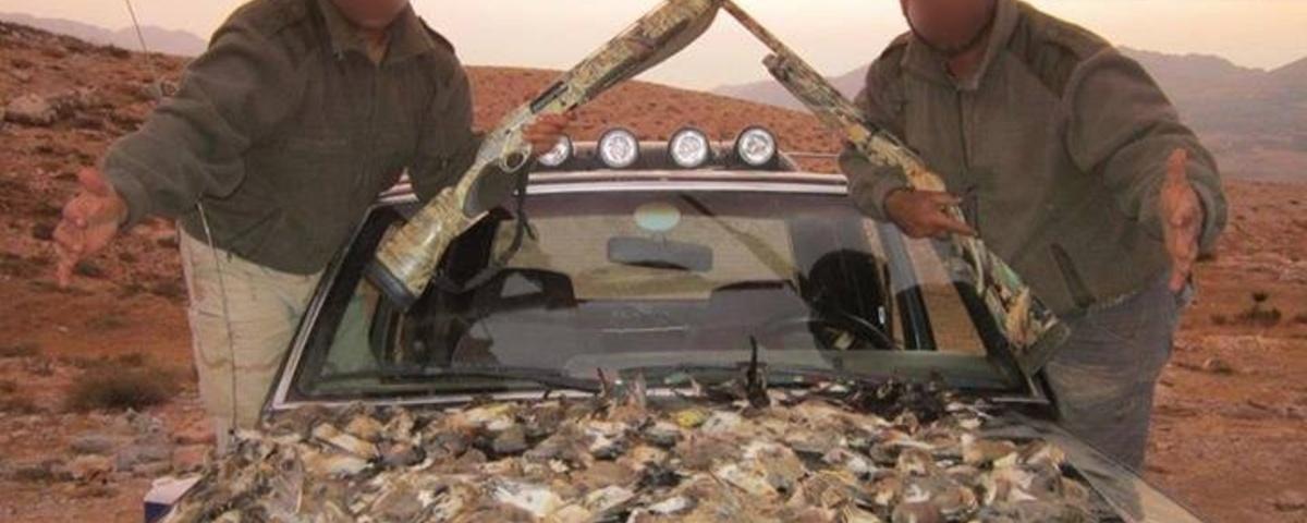 W Libanie zabijają ptaki dla zdjęcia