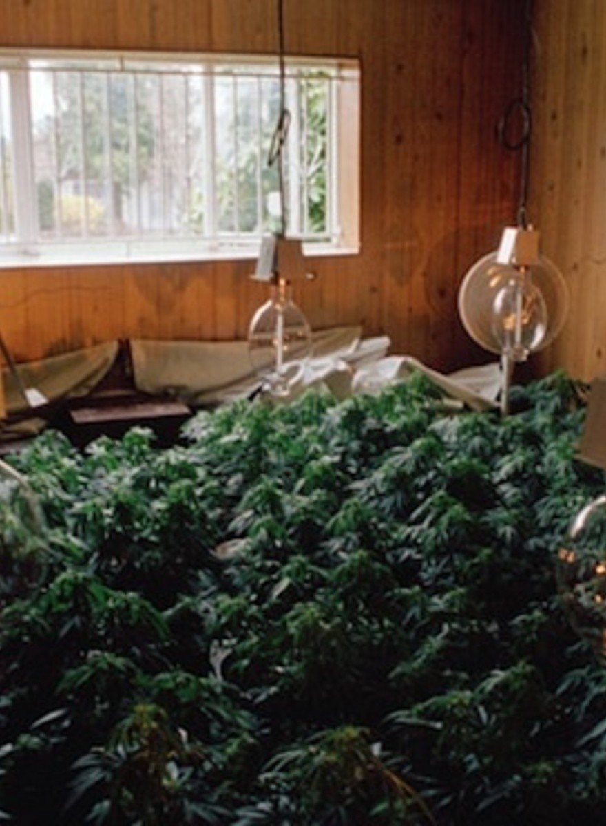 A Look Inside Illegal Canadian Weed Grow Houses from the 1990s