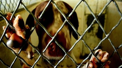"""Our Obsession with """"No Kill"""" Shelters Might Be Harming Animals"""