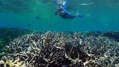 Is Australia Going to Kill the Great Barrier Reef on Friday?