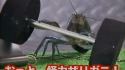 Het internet zou niet compleet zijn zonder Japanse insectengevechten