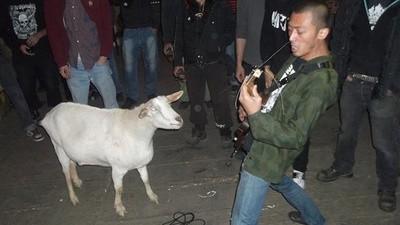 La cabra hardcorera vivirá por siempre