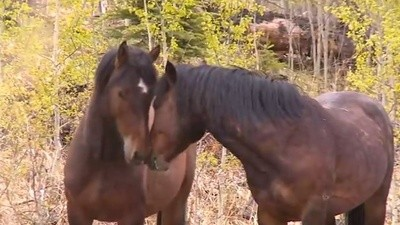 Alberta Is Set To Make It Legal To Slaughter Its Wild Horses