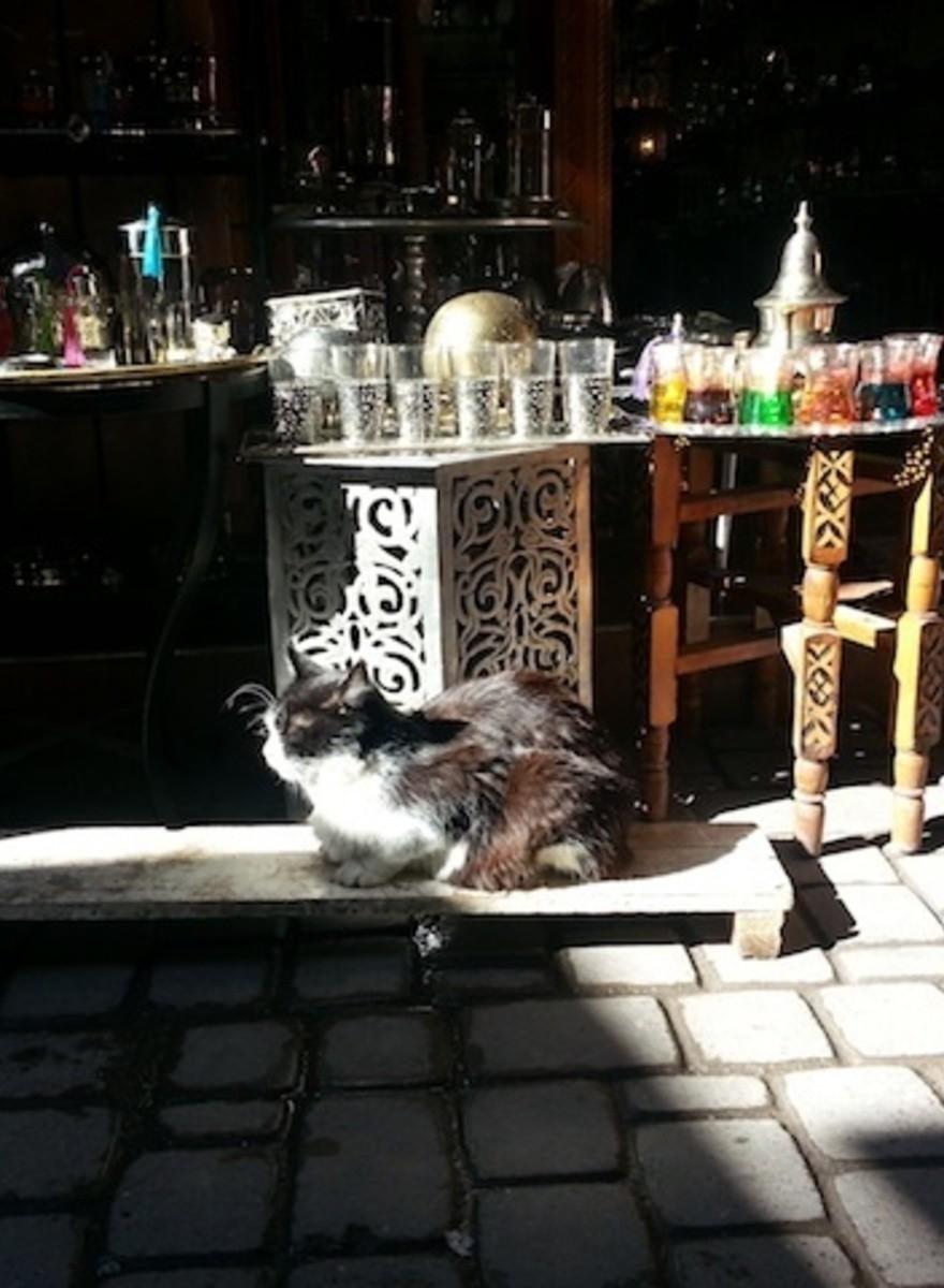 Los gatos callejeros de Marrakech necesitan un nombre