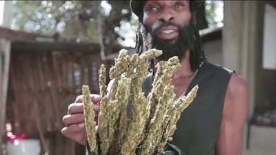 Jamaicaanse wietzaken