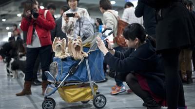 Komt er door de éénkindpolitiek een generatie hondenliefhebbers op in China?
