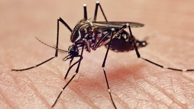 Meet Chikungunya, a Highly Infectious Disease Slated to Hit the American South