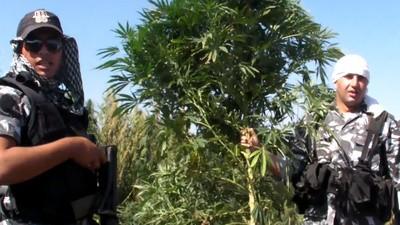 Lebanon's Hash Farm Wars