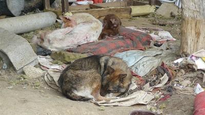 Una web para denunciar casos de maltrato animal