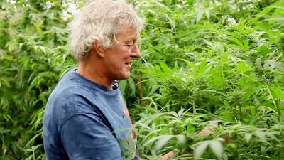 El mercado del cannabis en los Países Bajos se está enterrando en la clandestinidad