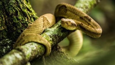 L'île aux serpents