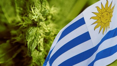 The Cannabis Republic of Uruguay