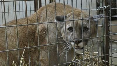 Lo que hay detrás del comercio de animales exóticos