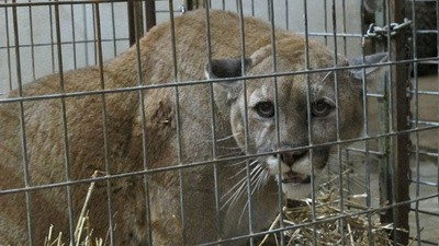 An Inside Look at the Exotic Animal Trade