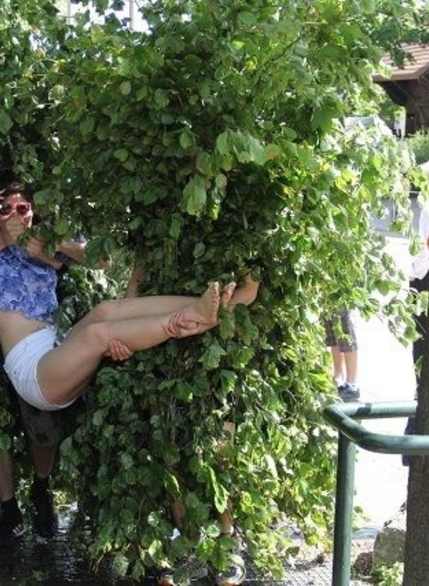 The Strange Swiss Custom of Dressing Up as a Bush and Throwing Women in Wells