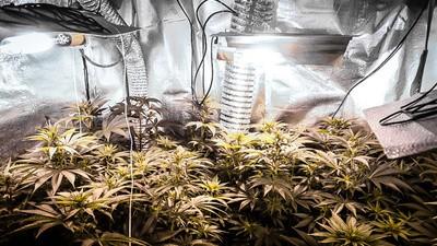 Wo lernt man am meisten über Cannabis? An der Cannabis-Universität!