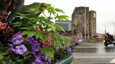 Activists Are Planting Weed in Public All over the UK