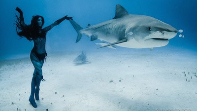 How to Dance with Tiger Sharks