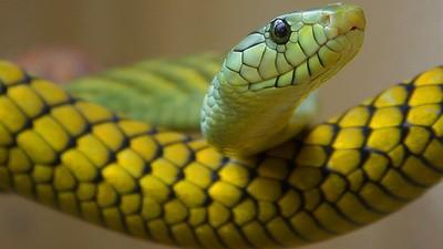 A ilha das cobras