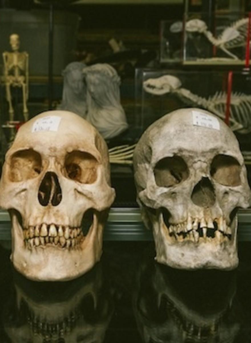 Visitamos la pequeña tienda en la que Hollywood se surte de cadáveres