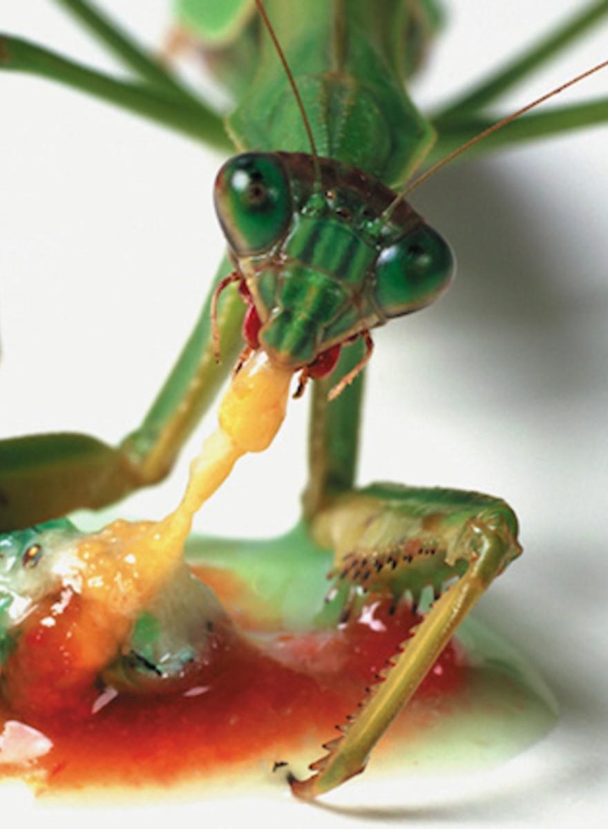 Wunderschöne Fotos von Tieren, die sich gegenseitig fressen