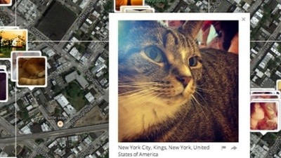 This Guy Is Cyberstalking the World's Cats in the Name of Privacy