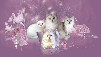 German Cat Breeder Websites Are the Most Beautiful Thing on the Internet
