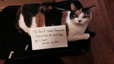 David Futrelle kämpft mit Katzenfotos gegen Feminismus-Hasser