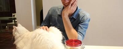 Я сходил в новое кошачье кафе в Монреале под грибами
