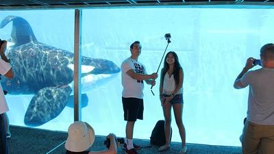 SeaWorld ist nicht nur eine Qual für die Tiere, sondern auch für die Besucher