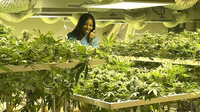 Platicamos con la reportera que renunció a su trabajo para dedicarse a su expendio de mariguana