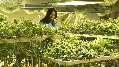 Wir haben mit der US-Moderatorin gesprochen, die für Marihuana gekündigt hat