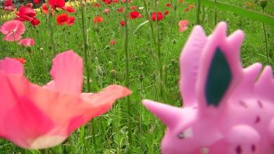 Dieser Fotograf liebt seine Pokémon wirklich