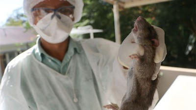 Die Pest kehrt zurück nach Madagaskar