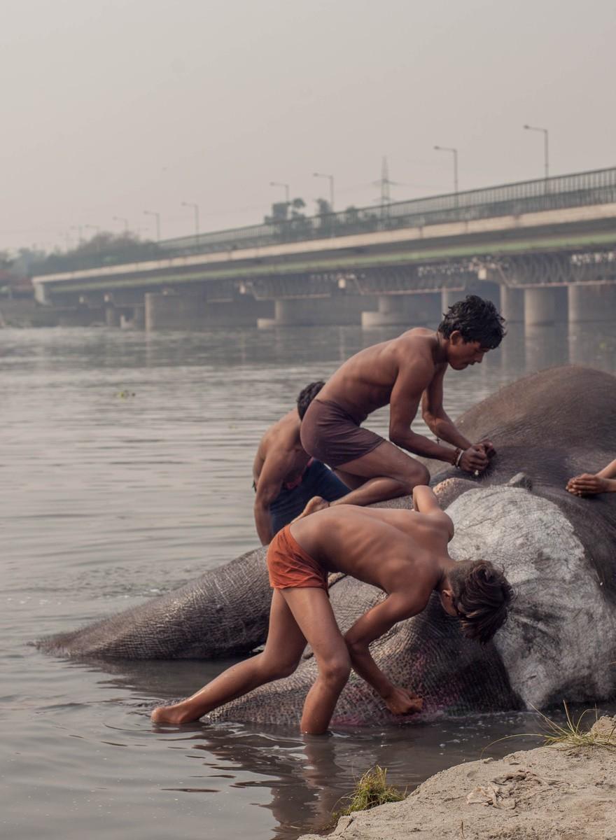 Fotografías de los elefantes de los barrios pobres de Deli