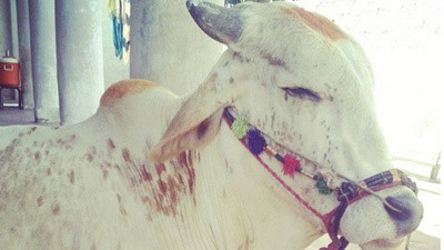 The Sacrificial Animals of Instagram