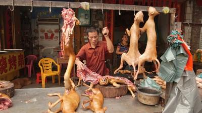 Een hondenleven in Yulin