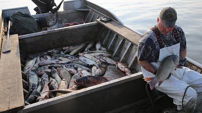An Invasive Species of Fish Is Taking Over America's Waterways