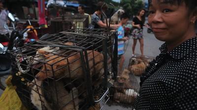 Dog Days of Yulin