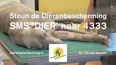 Waarom adverteert de Dierenbescherming met een dode hond?