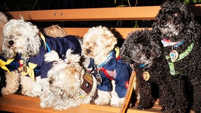 Meet the PupScouts, the Dog Version of the Girl Scouts
