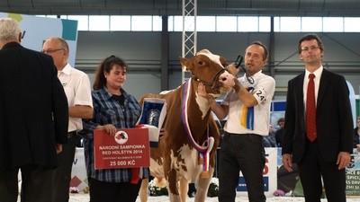 Nejlepší kráva v republice