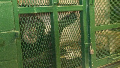 A Lawyer Makes the Case for Chimpanzee Personhood