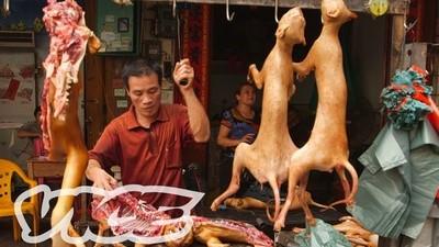 El festival de la carne de perro de Yulin