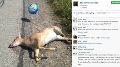 The Guy Trolling Instagram with Hundreds of Photos of Animal Corpses